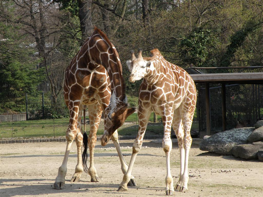 Berlin zoo tours